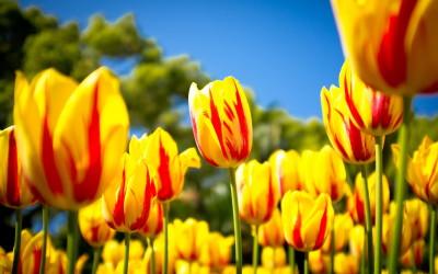 Vivez la magie du printemps!